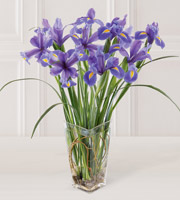 Order iris for birthday, anniversary or any occasion for a man or woman in Jenison, Wyoming, Byron Center, Walker or Grand Rapids, Sunnyslope Floral
