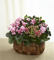 The FTD® Pink Assortment