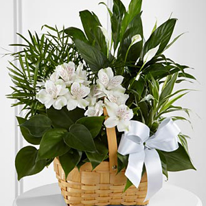 The FTD Peace & Serenity Dishgarden