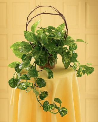 The FTD® Under the Vine™ Planter