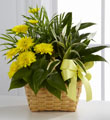 FTD Loving Light Dishgarden $56.99