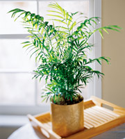 Send palm plants and other green and blooming plants to the funeral home, home address or business for same day delivery with Sunnyslope Floral