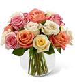 Sundance Roses