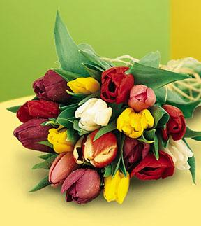 Hand Tied Tulips - Mixed Colors, w/ greens