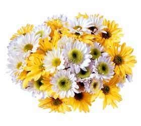 Hand Tied Daisies - Mixed Colors, w/ greens