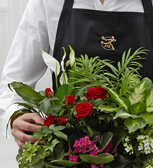 FTD Florist Designed Blooming and Green Plants in a Basket