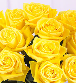 1 Dozen Yellow Medium Stem Roses - Wrapped