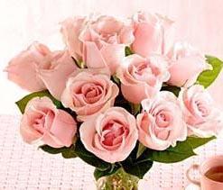1 Dozen Medium Stem Pink Roses - Wrapped