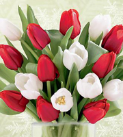 15 Stem Red & White Tulips