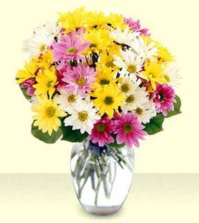 Mixed Daisy Bouquet with Vase
