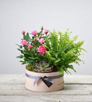 Florist Choice Plant Arrangement