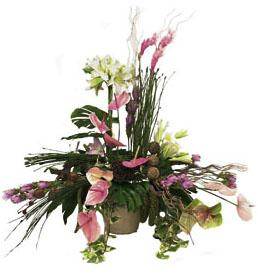 Arrangement tropicaux