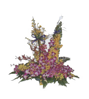 Arrangement of Orchids