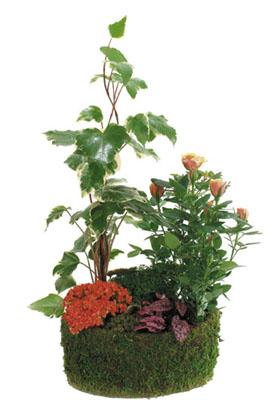 Arrangement of Green & Blooming Plants