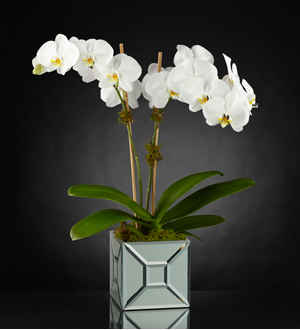 L'orchidée Elegant Impressions™ Luxury de FTD® - VASE INCLUS