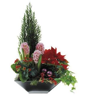 Arrangement of Plants