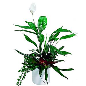 Arrangement of Plants \