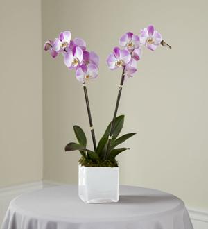 La jardinière Orchidée roseMC de FTD®