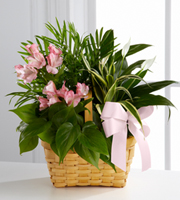 Le Jardin de Plante Esprit Vivant™de FTD ®