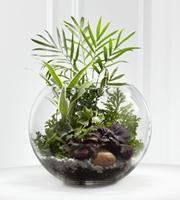 The FTD® Woodland Greens™ Terrarium