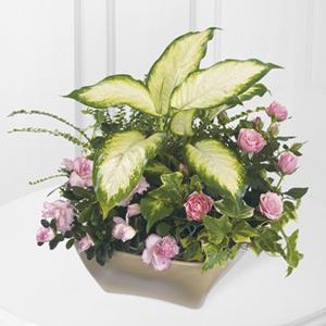 The FTD® Garden of Grace™ Planter