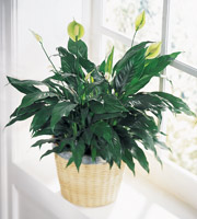 The FTD® Peace & Serenity™ Planter