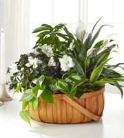 The FTD® Serene™ Dishgarden