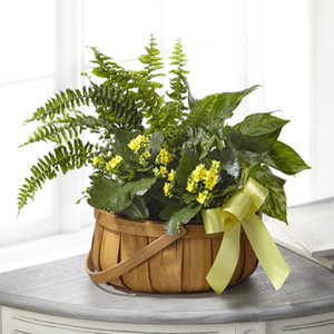 The FTD® Always Dear™ Dishgarden