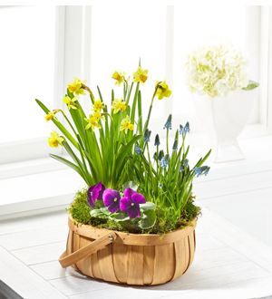 The FTD® Spring Blooms™ Bulb Basket