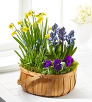 The FTD® Spring Blooms™ Bulb Basket