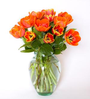 Truly Tulips Orange