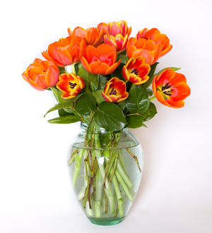 Truly Tulips Orange