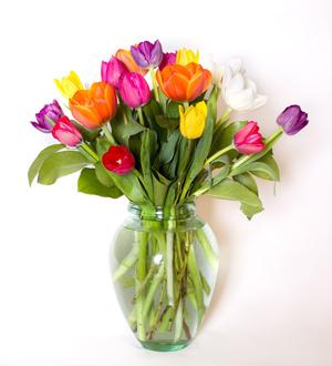 Truly Tulips Rainbow