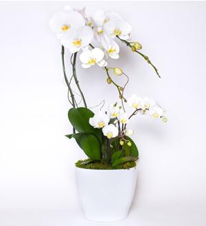 Grande Orchid Garden