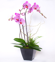 Orchid Garden Purple
