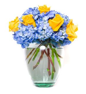 Rose Hydrangea Medley Yellow