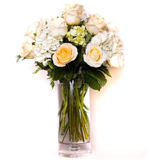 Rose Hydrangea Garden White