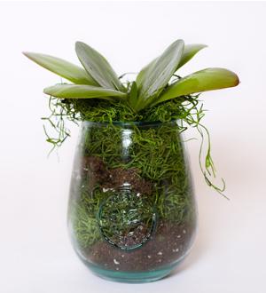 Petite Succulent