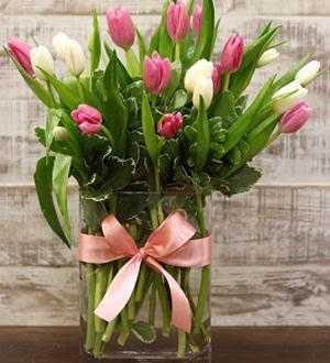Modern Tulips Pink/White