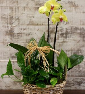 Orchid Garden Basket