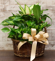 Foliage Basket Large