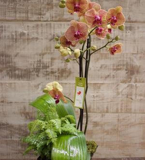 Debi Lilly  Orchid Garden