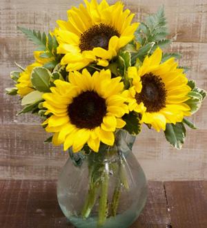 Sunflower Petite