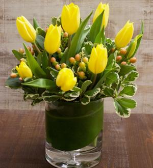 Tulips Petite