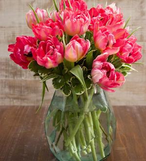 Tulips Medium