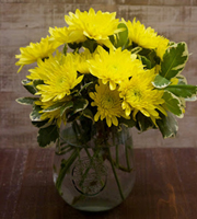 Pom Yellow Daisy Medium