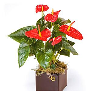 Seasonal Plants Flowering