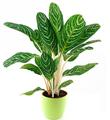 Green Plant in Flowerpot