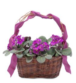 Very Violet Basket