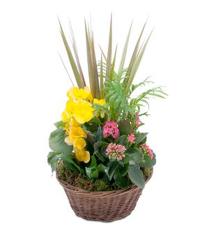 Bloomin\' Sunshine Basket